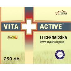 Germeni de Lucernă 250 caps
